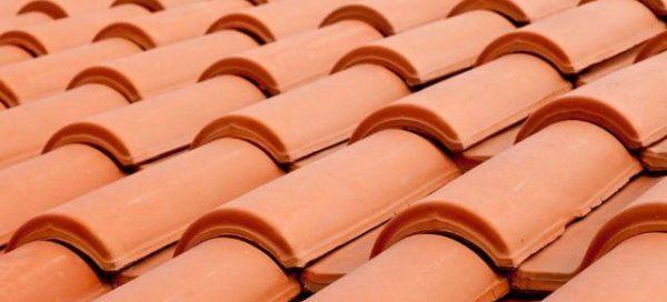 ratos no telhados dedetização solux
