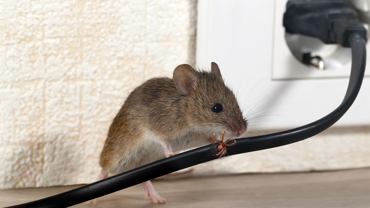 Eliminar Ratos