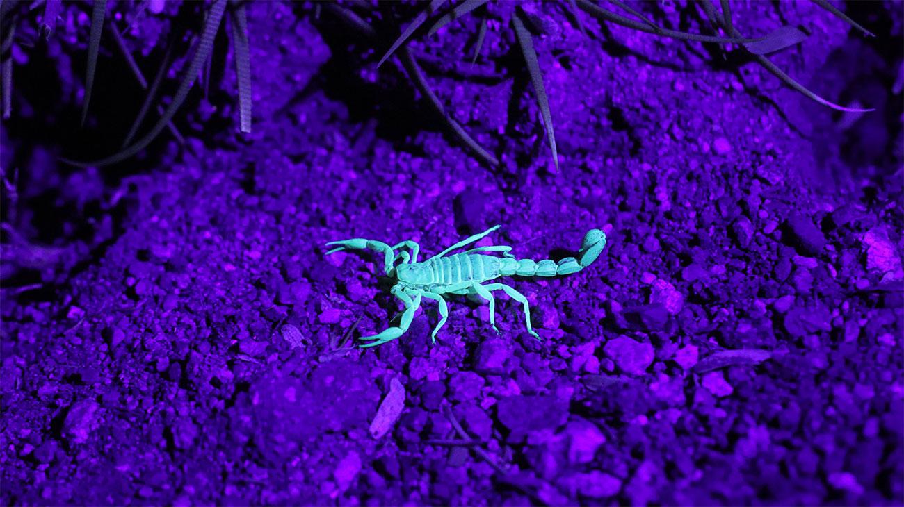 Eliminar Escorpiões